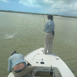 Splashing bonefish