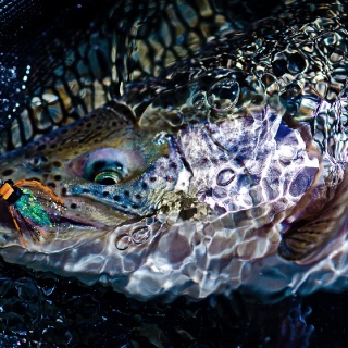 Estancia Laguna Verde Fly fishing lodge - Jurassik Lake  Rainbow fishing