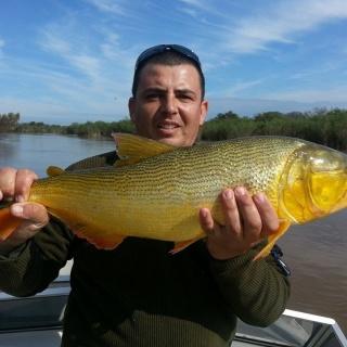 01/08/2014 Golden Dorado Parana River Rosario Argentina