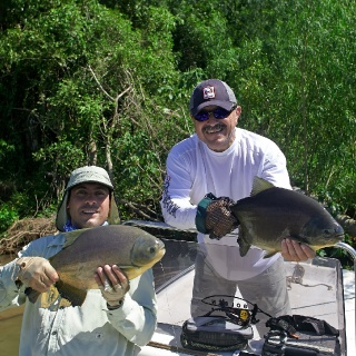 Doublet Pacu - Golden Fly fishing.