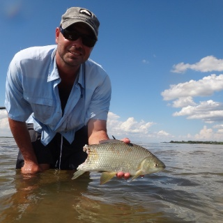 Thanks god it wasn't a client's arm !  Fishing the flats..you look for Dorados attacking & feeding ! - Golden Fly fishing.