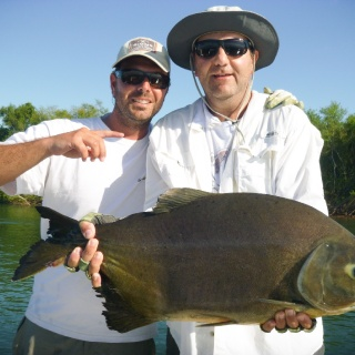 Pacú on a #6 rod - Golden Fly fishing.