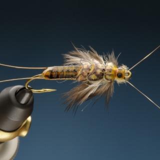 Ninfas especiales de stonefly