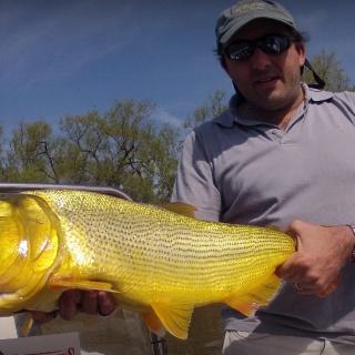 Fly fishing for Golden Dorado - Dario Arrieta
