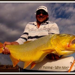Big Golden Dorado - Fly fishing with Dario Arrieta