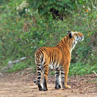 Welcome to the Jim Corbett Tiger Reserve