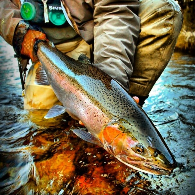Pulaski (NY) United States  City pictures : Paul's Guide Service Fly fishing Guide | Fly dreamers directory