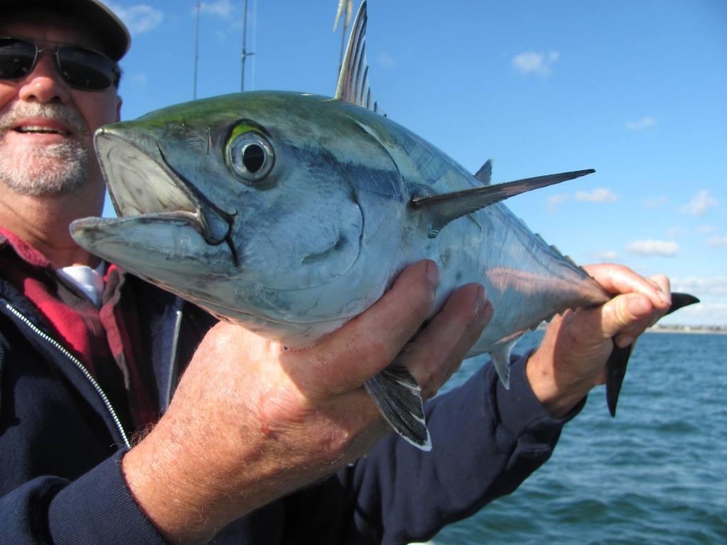 cape cod fly fishing guide