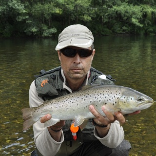 Great sea trout