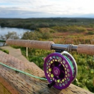 My King Salmon Spey Rod! Sage TCX 14' 3'' 9wt. Nautilis 11-12 Fly Reel. .32 Running line with 625 Skagit Head.