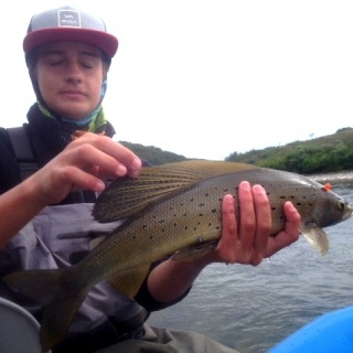 Typical Grayling in S.W. Alaska