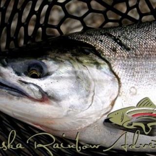 Coho salmon, in chrome!