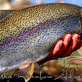 Typical Moraine Creek Rainbow.