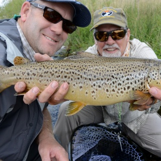 This Madison River brown wasn't missing any meals!