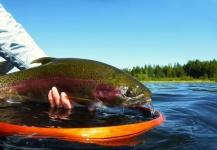 The Lure of Stillwater Fly Fishing by Brian Chan