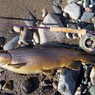 Beautiful brown caught in Lago general Carrera area; 59cm.