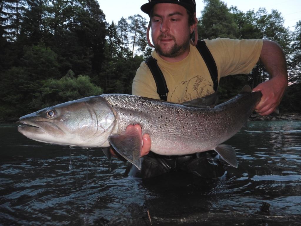 Nicholas ferentzi guidings for hucho danube salmon for Fly fishing for salmon