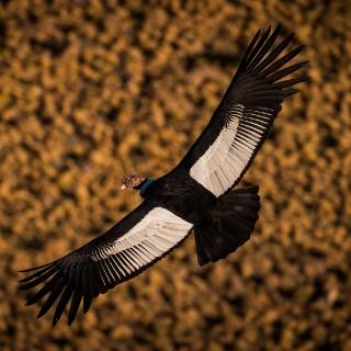 Condor by Eliseo Miciu