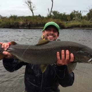 Big Fat sea run Brown Trout - Fly fishing Lakutaia Lodge