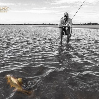 Fly fishing for Golden dorado - Golden Fly fishing.
