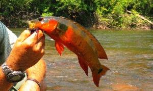 Bararati river part 2, Apui, Amazon, Brazil