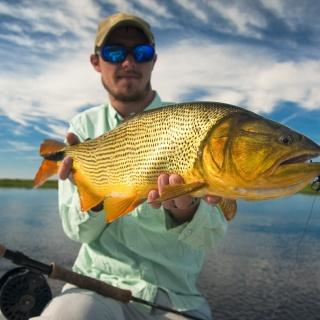 Fly fishing for Golden Dorado - Fergus Kelley at Pira Lodge