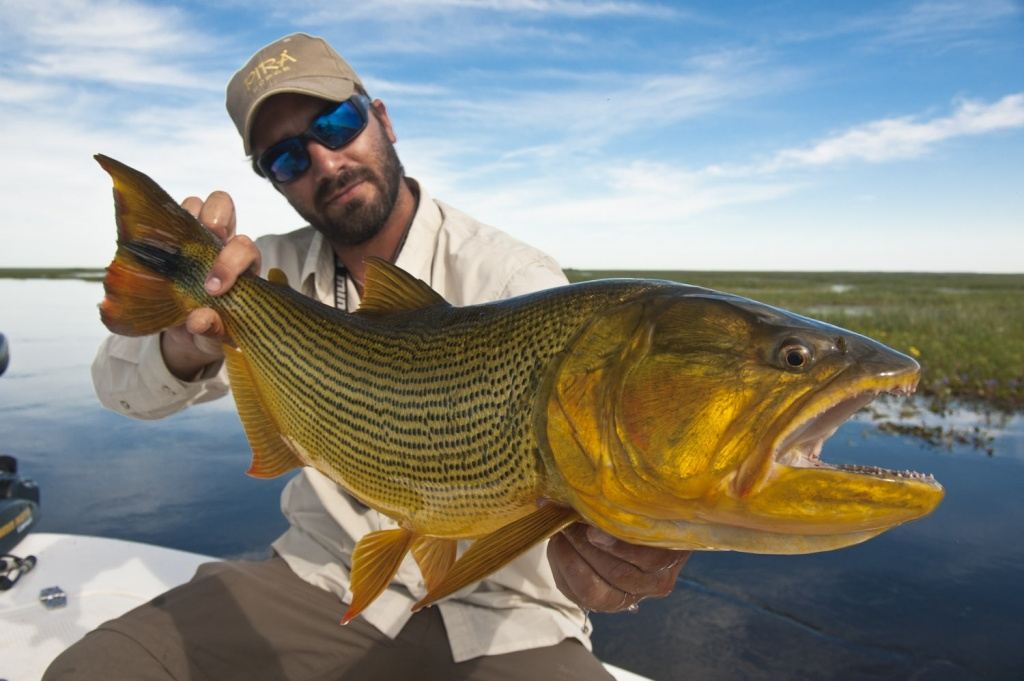 Pir lodge fly fishing lodge fly dreamers directory for Golden dorado fish