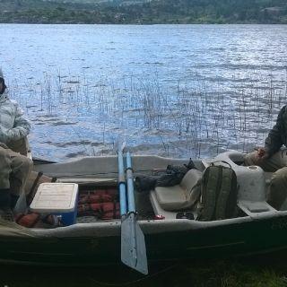 Lago pulmari