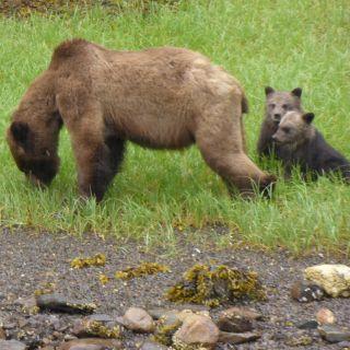Bears while fishing - Deep Creek Lodge