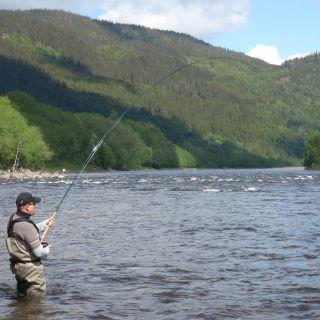 Fish on at Gaula Flyfishing Lodge Beat 3 - Röskaft pool