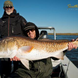 Huge bull redfish