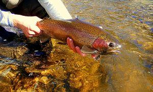 River, Jackson, Wyoming, United States