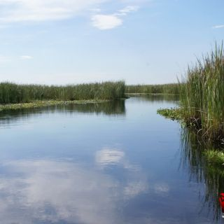 Ibera marshland