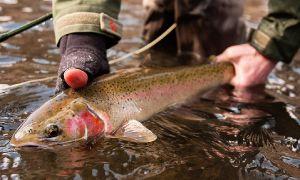 Salmon river, Idaho, Sun Valley, Idaho, United States