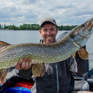 Big pike from the lake in Plobsheim, Alsace, France !