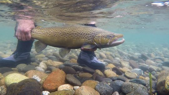 Fishing Report: Limay medio by Alejandro Tosco