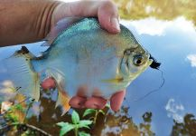 Matt Carlson 's Fly-fishing Pictureof a Other Species– Fly dreamers