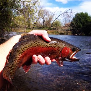 Western hatch guide service - Fly fishing Guide, Casting