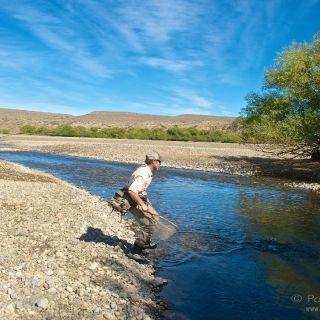 a big brown fighting hard - side channel - Collon Cura River