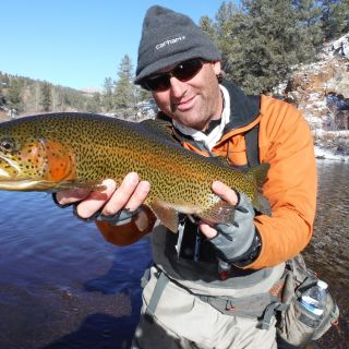 Jay on the South Platte near Deckers, CO
