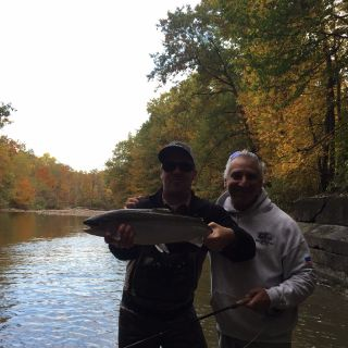 New York steelhead