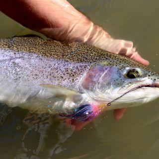 Spey fishing for Cattaraugus Creek New York steelhead