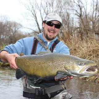 15 pound New York lake run brown trout