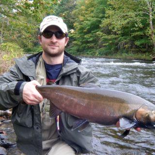 New York coho salmon