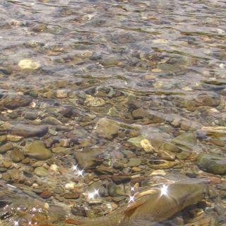 Southern Riffle Fishing