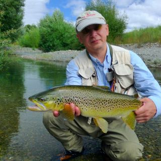 5lb small stream dry fly caught wild Brown Trout.