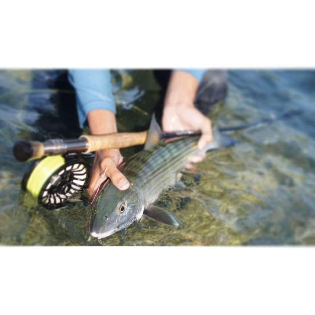 Sofla angling co fly fishing guide fly dreamers directory for Fly fishing book