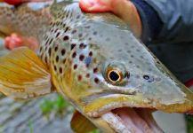 Nicholas Lawton 's Fly-fishing Catchof a Loch Leven trout German| Fly dreamers