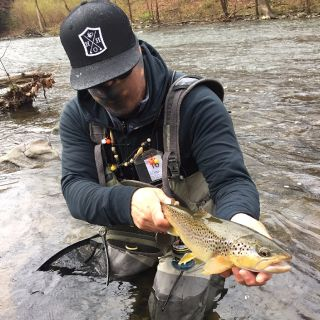 Central Pa Wild Brown Trout