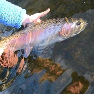 Bighorn river wy
